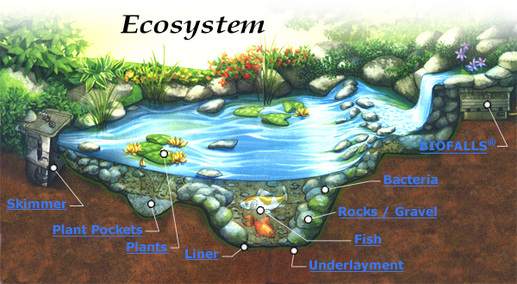 Ecosystem and Biome - Ecology